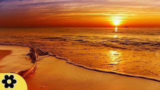 8 Hour Deep Relaxing Sleep Music: Nature Sounds, Meditation Music, Relaxation Music ✿101C