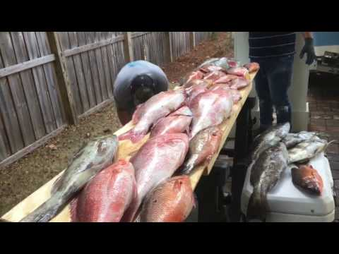 Gulf of Mexico spearfishing