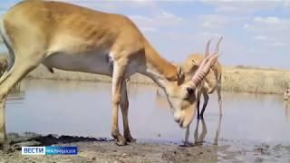 Сегодня отмечается  Всемирный день дикой природы