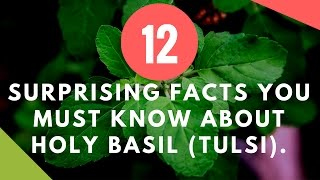 Surprising Facts You Must Know About Holy Basil or Tulsi | Home Remedy