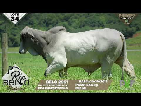 LOTE 34   BELO 2951