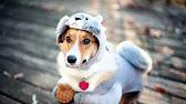 limargy одежда для собак купить - YouTube