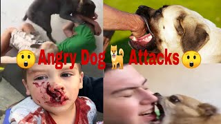 Dog Attacks Human And Cat Attack  | When Pet Gone Crazy 2021