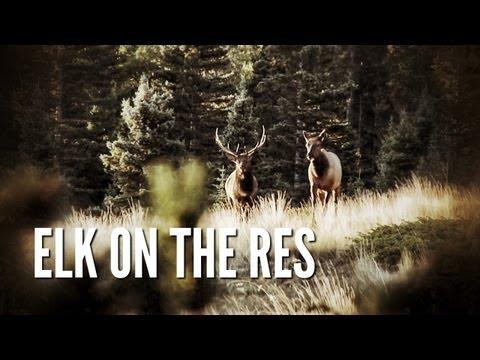 Elk Hunt On The Reservation | New Mexico Elk Hunt