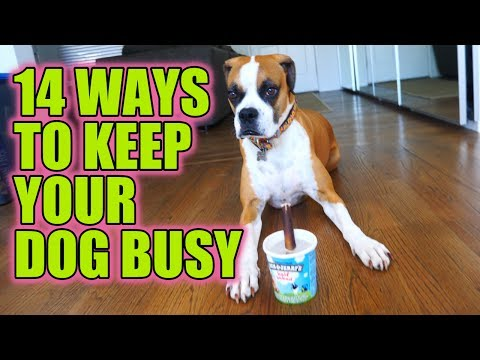 How To Keep Your Dog Busy While You're At Work