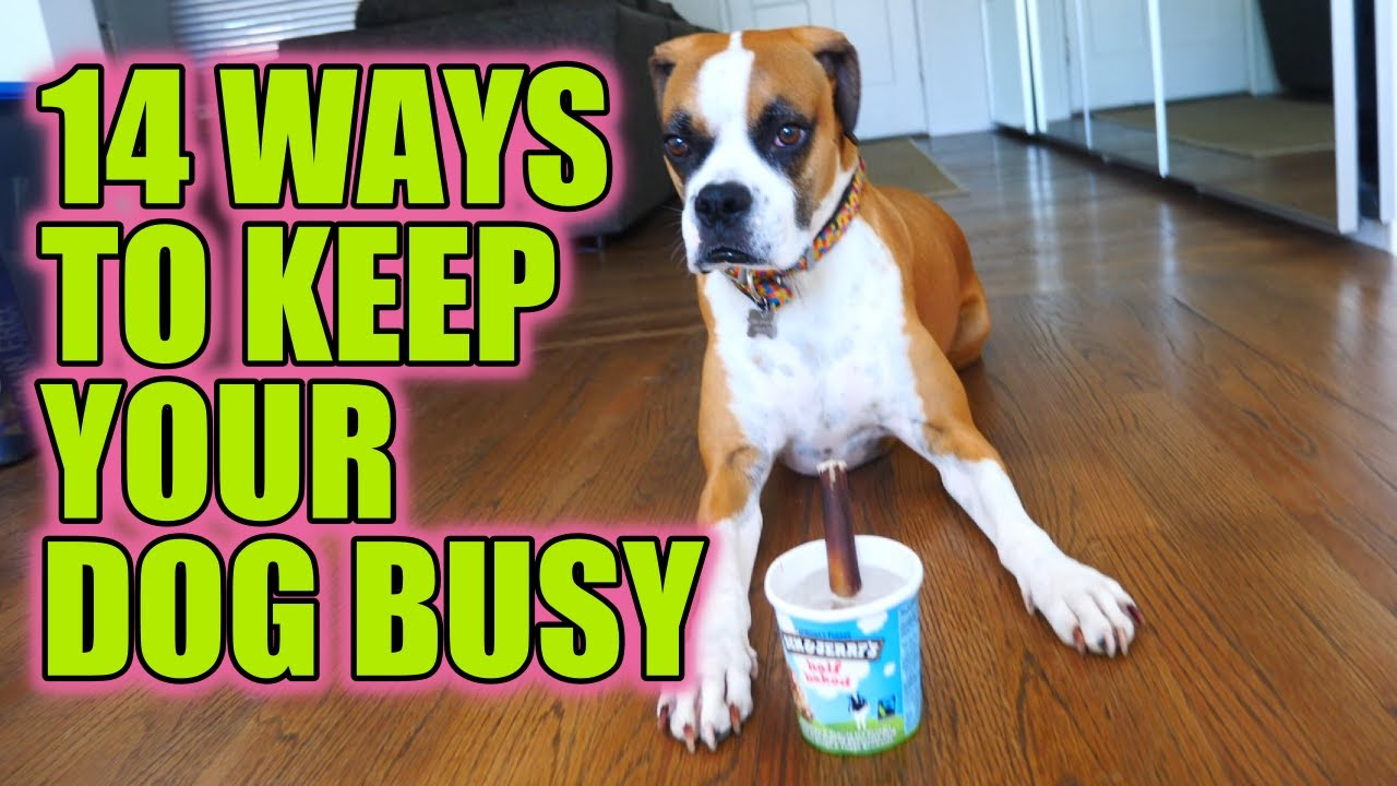 14 Ways to Keep Your Dog Busy While You're At Work – The Dog