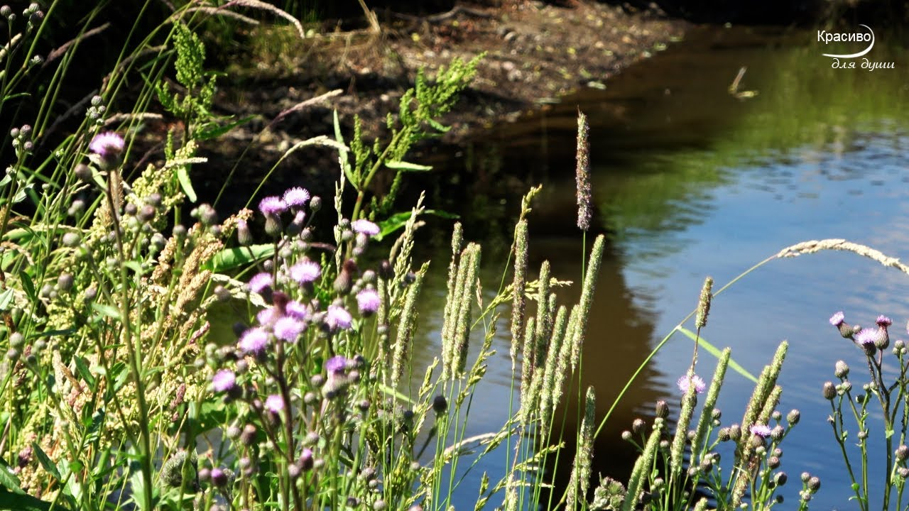 «Вместе через года» Красивый Музыкальный Релакс, на берегу реки ЛЕТОМ