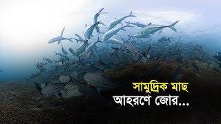 সামুদ্রিক মাছ আহরণে জোর | Bangla Business News | Business Report | 2019