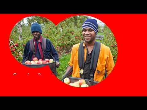 Labour Solutions Vanuatu