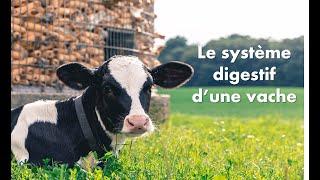 le système digestif de la vache