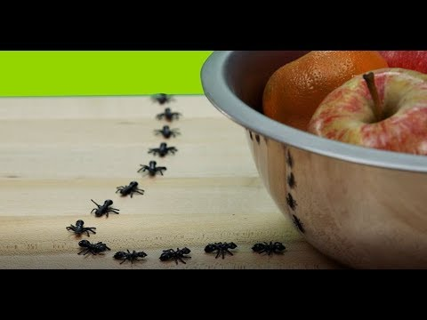 Keep Bugs Away From Your Yard | The Allstate Blog