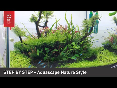 STEP BY STEP AQUASCAPE NATURE STYLE