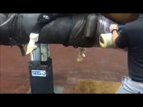 How to Collect Seminal Fluid From a Dog from YouTube · Duration:  1 minutes 46 seconds