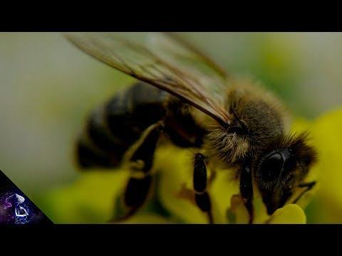 क्या हो अगर दुनिया की सारी मधुमक्खियाँ मर जाएँ ? What would happen if all the bees died? Hindi