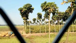 33821 Sealdah-Bongaon Local leaving Gobardanga and arriving at Thak...