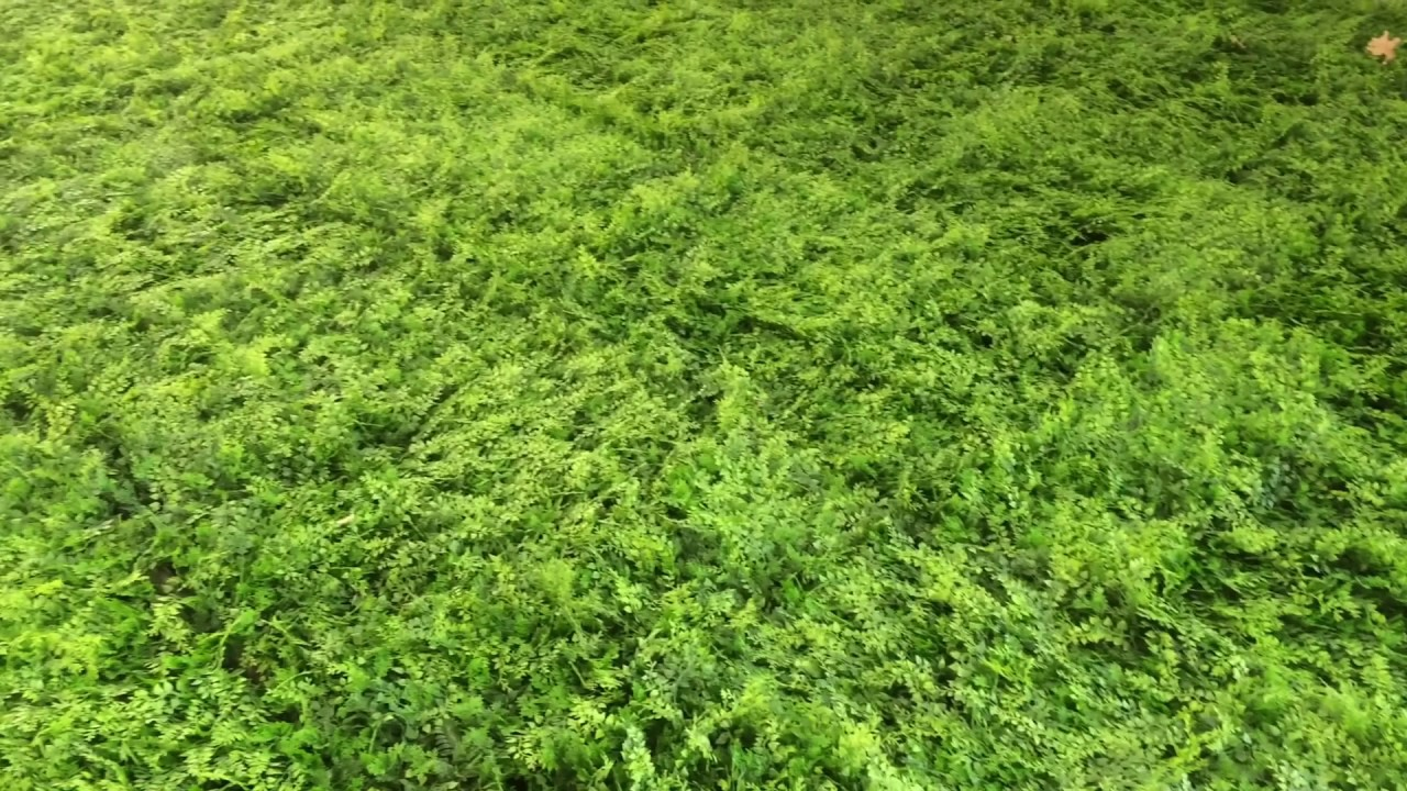 Plantes Pour Mur Végétal Extérieur mur végétal artificiel - fougère