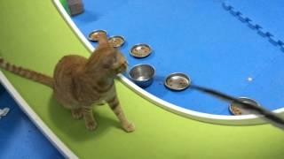 橘太玩飛輪 catwheel