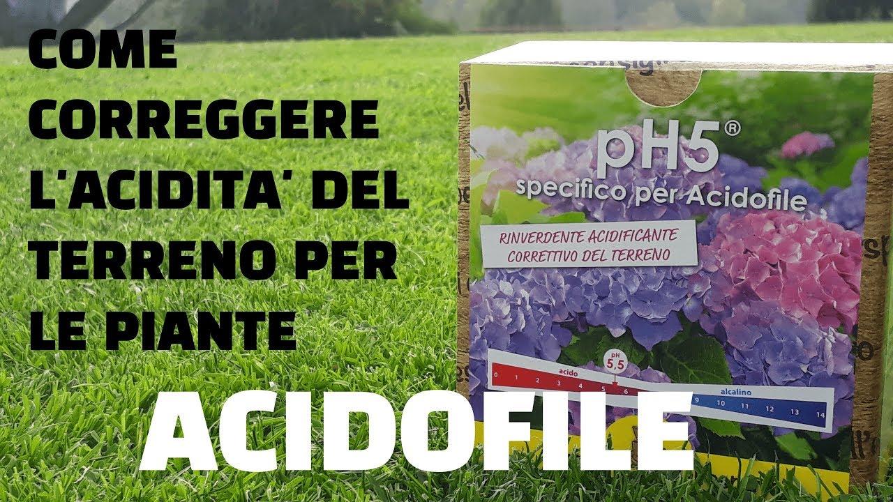 Quando Potare Il Bouganville piante acidofile: elenco varietà e consigli