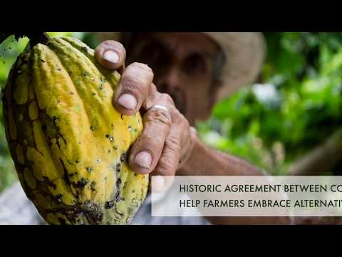 Colombia - UNODC historic agreement to tackle country's coca cultivation