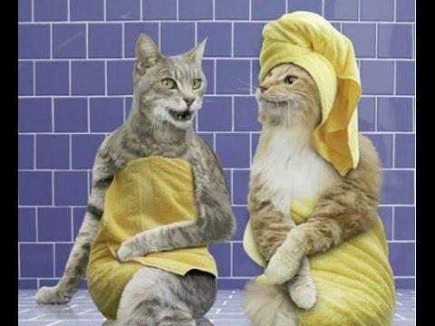 Смешные животные 2 ● Приколы 2014. Кошки, собаки и другие ● Funny animals ● Cats, dogs and others #2 – YouTube