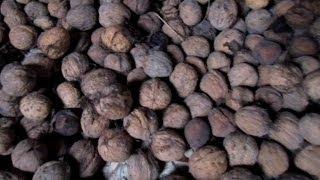 Как Сушить Грецкий Орех (walnut)