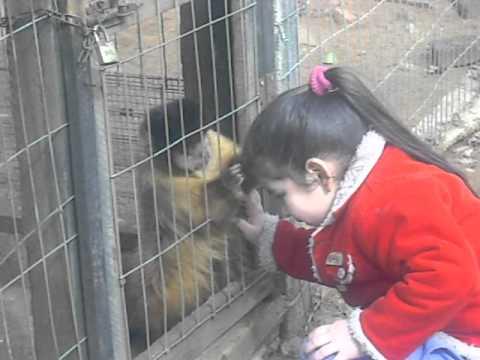 como sacar piojos monos