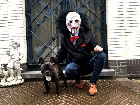 Funny Dog VS Jigsaw Prank: Flor The Frenchie