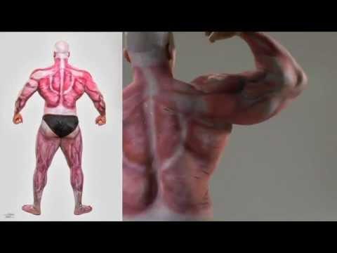 Muscular Anatomy Body Painting By Orlando Barsallo Youtube