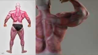 Muscular Anatomy Body Painting by Orlando Barsallo