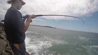 Point Plomber Jewfish Fight