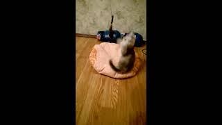 продам котенка 2,5 месяца