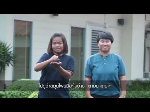 สวนสมุนไพรสมเด็จพระเทพฯ : วิทยาลัยสารพัดช่างชลบุรี กลุ่มที่ 4