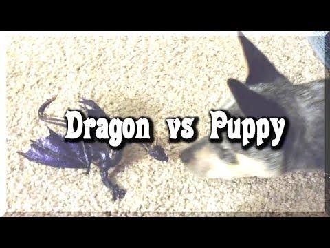 Dragon vs Puppy