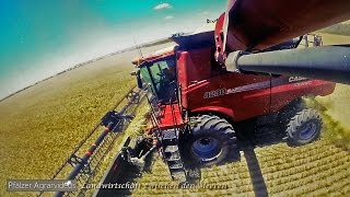 [GoPro] BIG WHEAT HARVEST IN AUSTRALIA ► 2 CASE AXIAL FLOW & MAGNUM with GRAIN KING