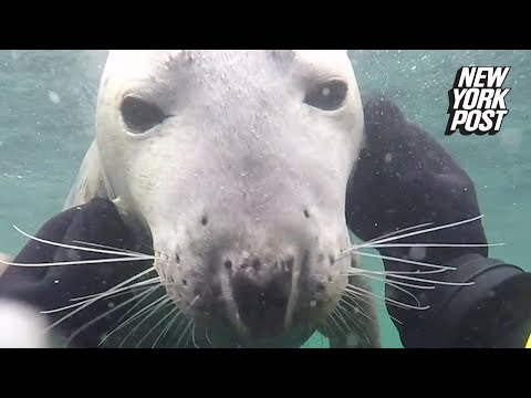 This playful seal takes the best underwater selfies | New York Post