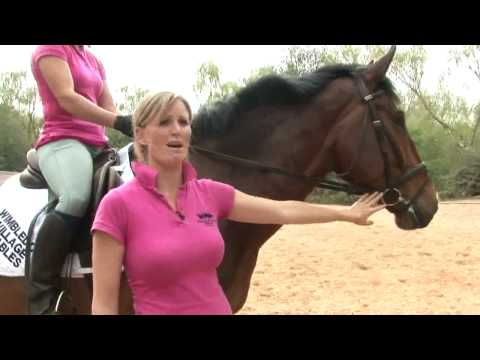 Horse Riding: How To Start