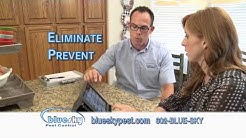 Blue Sky Pest Control - Eliminate Termite Problems Today
