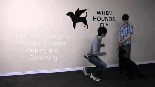 Canine Good Neighbour (CGN) Prep Class