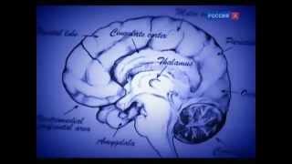 Психология человека лоботомия часть 1(Психология человека лоботомия часть 1., 2014-05-28T04:47:57.000Z)