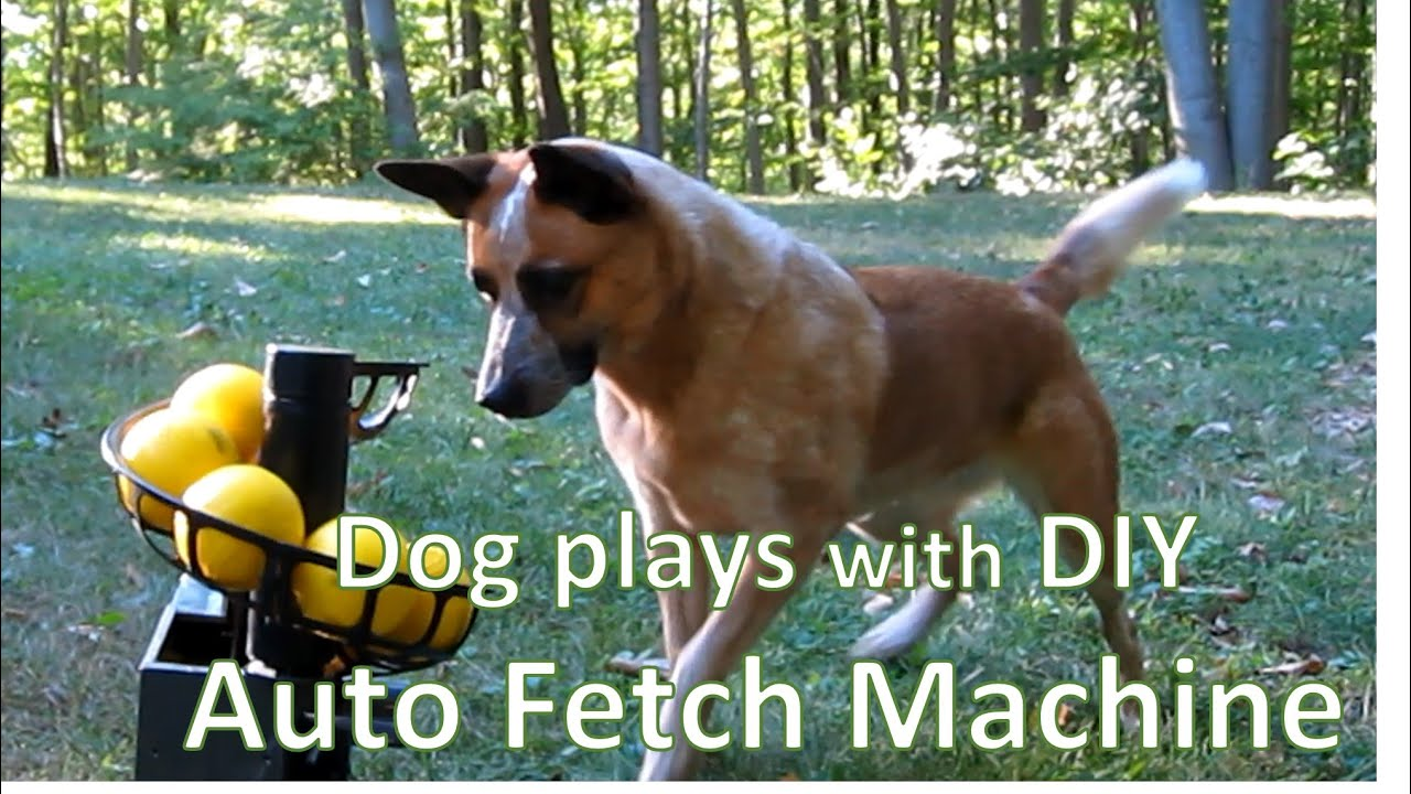 dog plays with automatic fetch machine amazon echo and mobile phone