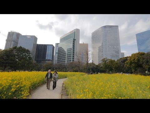 【4K】Hamarikyu Gardens videowalk
