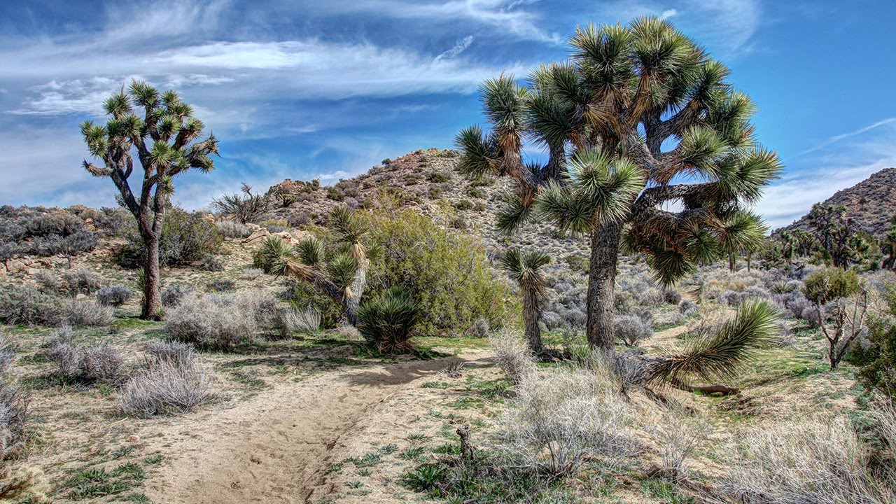 joshua tree national park black girls personals Why jennifer chose joshua tree starry night casita is conveniently located three blocks from downtown joshua tree and five minutes away from joshua tree national park this house is one of the originals, dating back to the 1950s.