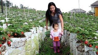 Bayi lucu Memetik Buah Strawberry - Kebun strawberry Sarangan Magetan - stawberry picking