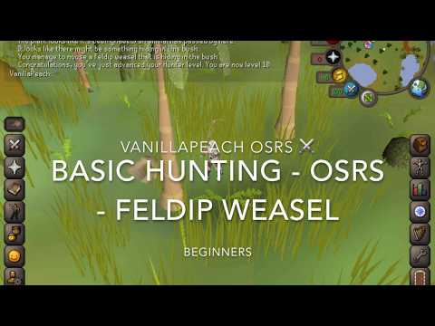 Feldip Weasel OSRS Beginner Hunting Guide