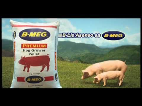 hog raising Hog raising in the philippines has been a profitable business for filipinos through the decades its popularity is evidently seen among backyards of rural families an average filipino family usually raises a small number of pigs to augment their daily needs.