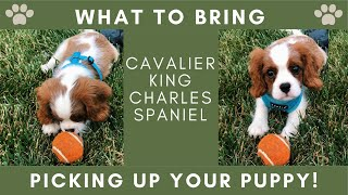 Picking Up Your New Puppy! | WHAT TO BRING & TIPS | Cavalier King Charles Spaniel