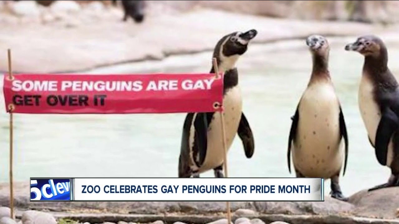 London zoo gay penguins pride month celebration
