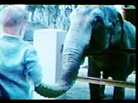 1963 Jacksonville FL Zoo, Golden Years