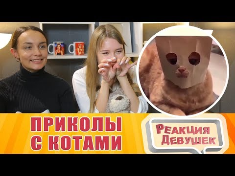 Реакция девушек - КОШКИ 2019 ПРИКОЛЫ С КОТАМИ Смешные котики и коты 2019 Funny Cats
