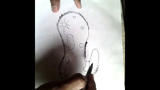 Como  dibujar un paramecio fácil(bacteria).